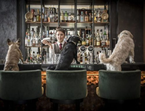 Cocktail evenings just for dogs are coming to a bar in London!